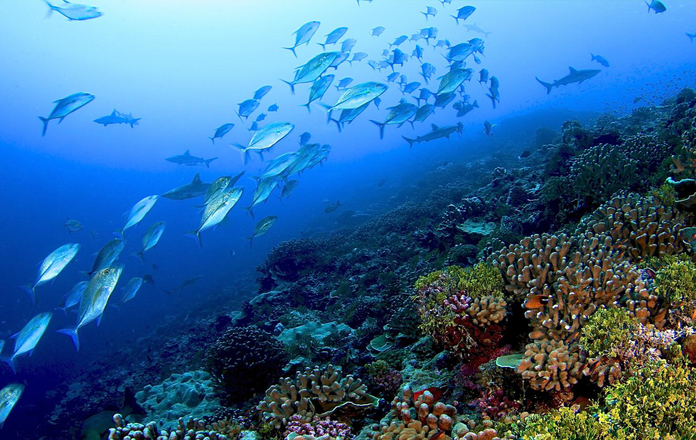 Mercan resifi.