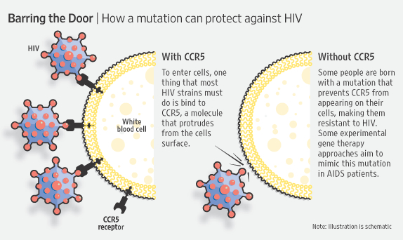 HIV'in hücreye girişinin engellenmesini resmeden bir görsel.