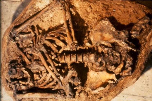 Görsel 3. Günümüzden 60.000 yıl öncesine ait, 1983'te İsrail Kebara Mağarası'nda bulunan Neandertal mezarının fotoğrafı.