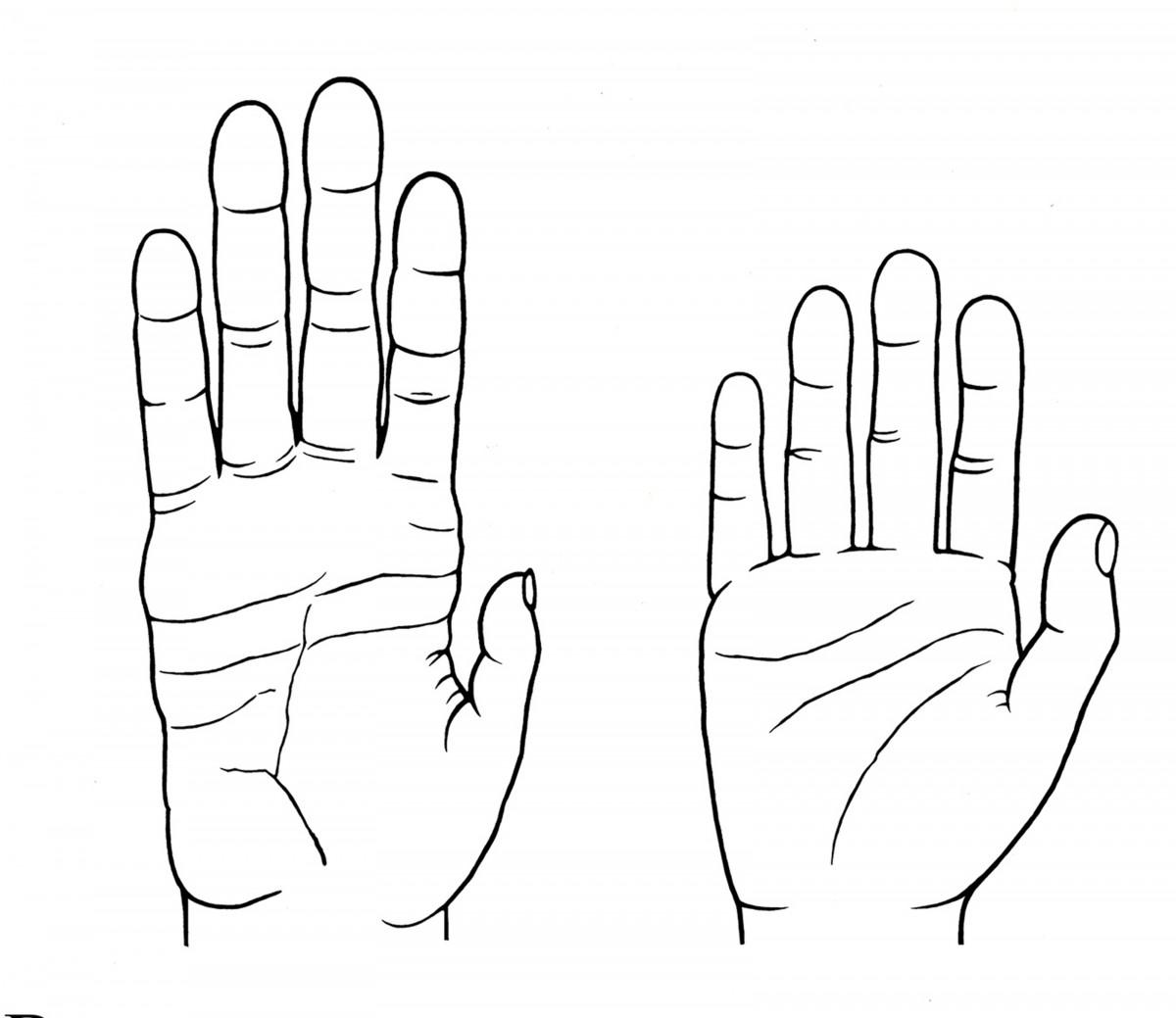 Sol tarafta bir şempanzenin eli gözükmektedir. Sağ tarafta ise insanın eli...