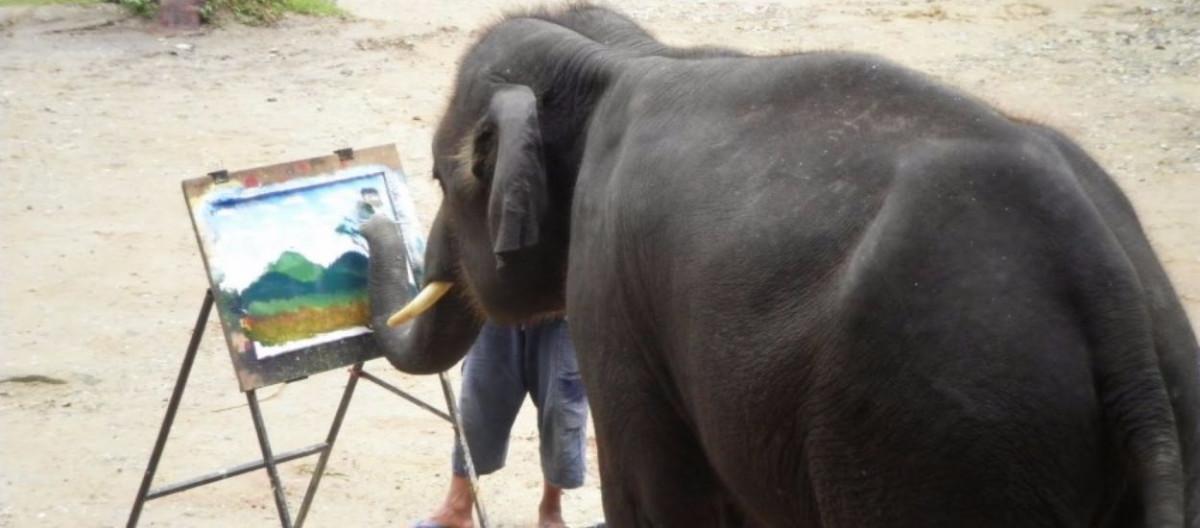Sürecin adım adım açıklaması, filin çizilmesi