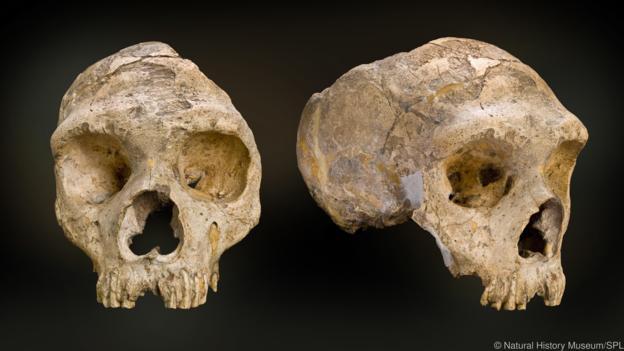 Cebelitarık, Neanderthallerin son eviydi.