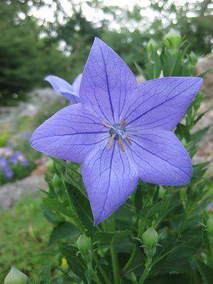 Dünyadaki en büyük çiçek: şaşıracaksın