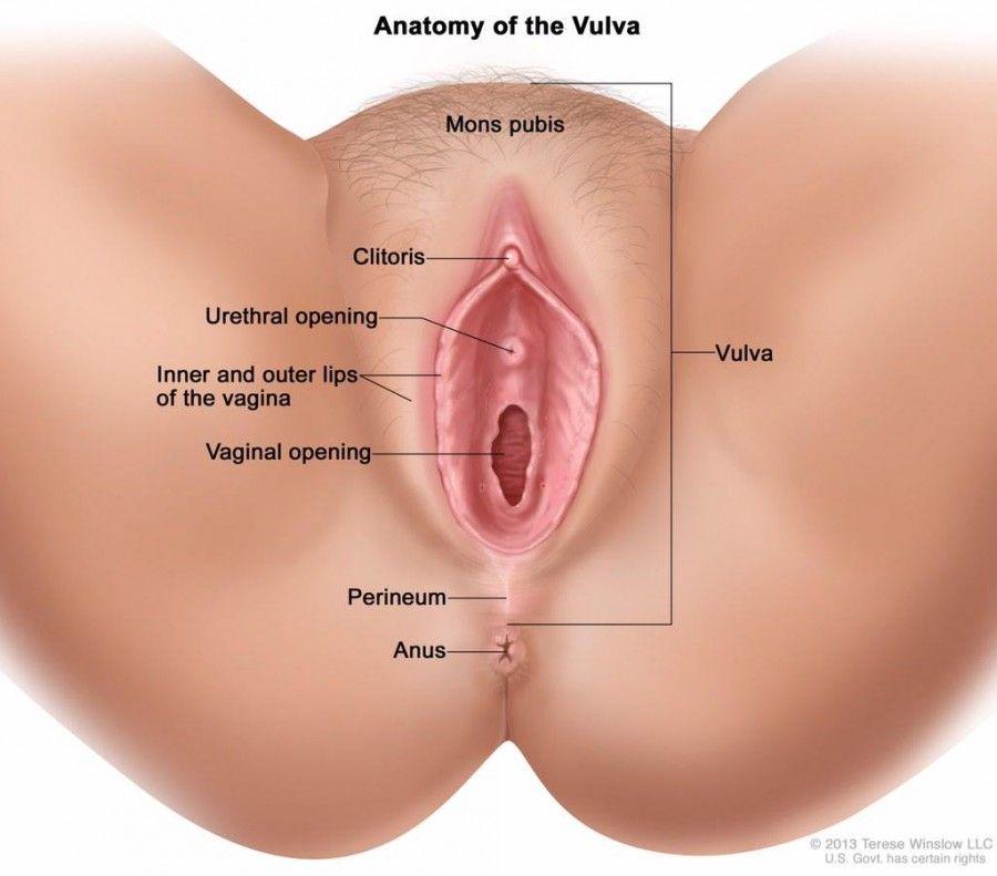 Порно фото вагины крупное фото лижет