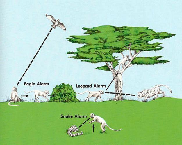 Görsel 4. Eski dünya maymunları