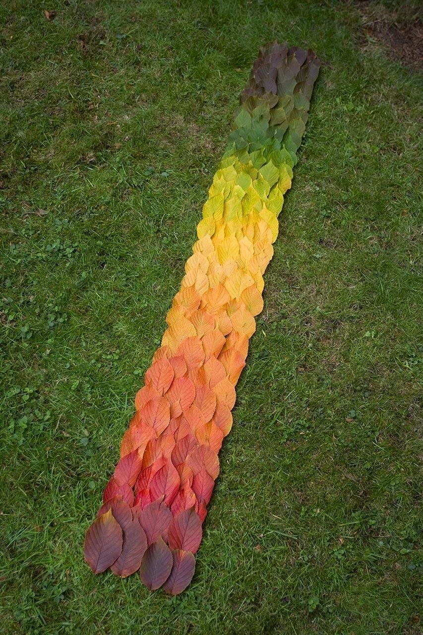 Mevsimlerin değiştiğinin en bariz göstergelerinden biri, bitki yapraklarının renklerinin değişimidir.