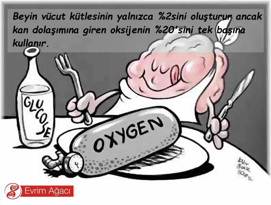 Bir insan bir günde havadan ne kadar oksijen alır