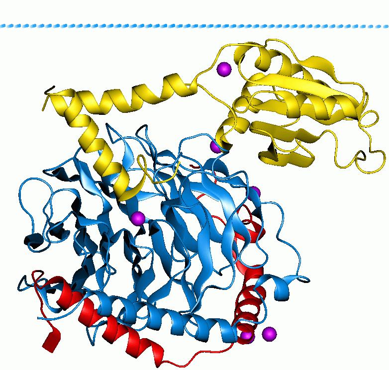 G-proteini