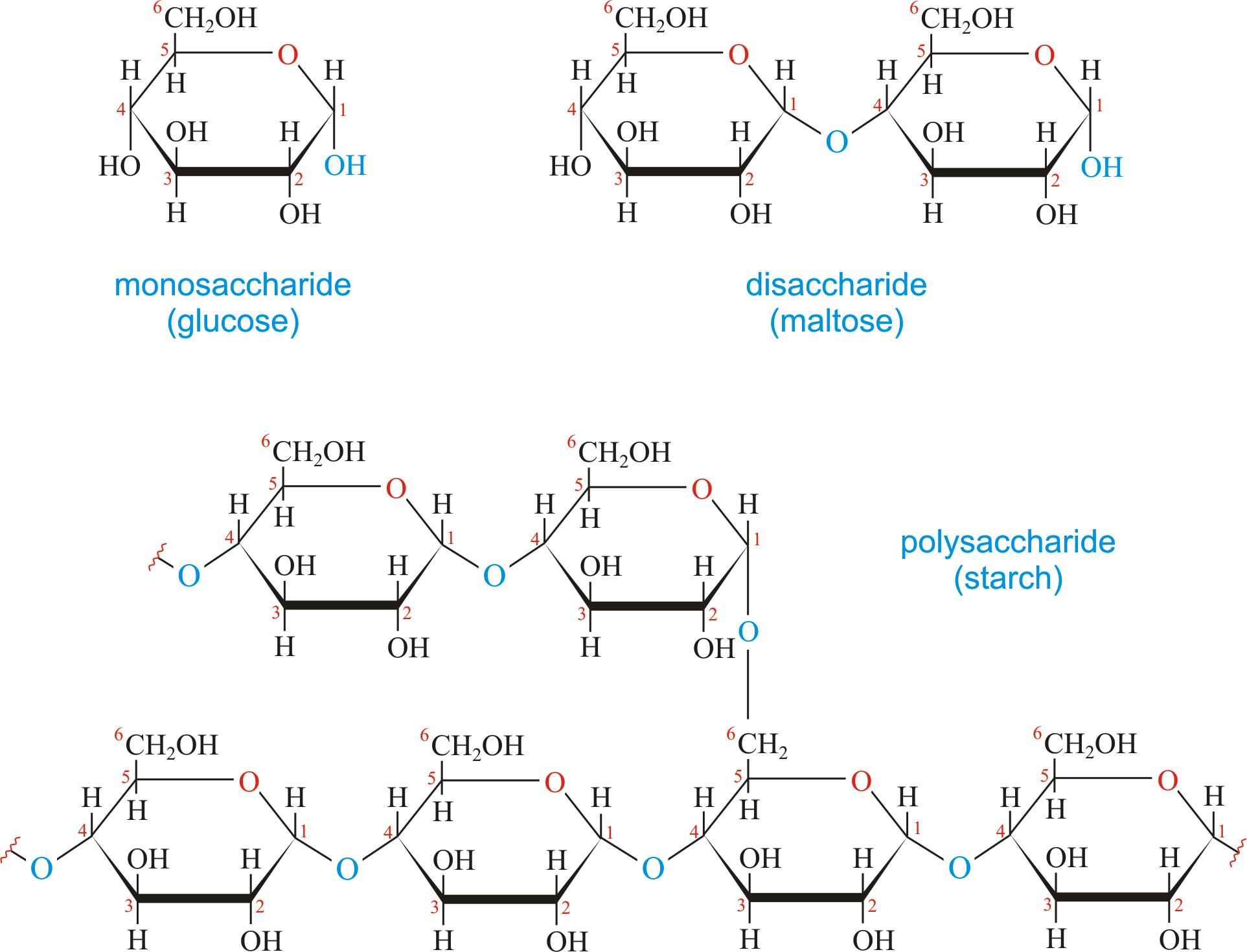 """Sol üst köşede basit bir şeker (monosakkarit) olan glikoz görülüyor. Sağ üst köşede, iki şeker molekülünün bir araya gelmesiyle oluşan ve bu nedenle """"ikili şeker"""" (disakkarit) olarak adlandırılan maltoz molekülü görülüyor. Aşağıda ise bitkilerin ana besin deposu olan, çok sayıda glikozun birbirine bağlanmasıyla oluşan, bu nedenle """"çoklu şeker"""" (polisakkarit) olarak bilinen nişasta molekülü görülüyor."""
