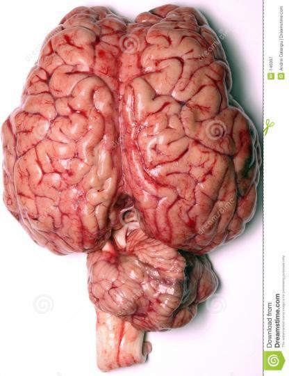 Beyni nasıl çalıştırabilirim Göründüğü kadar zor değil