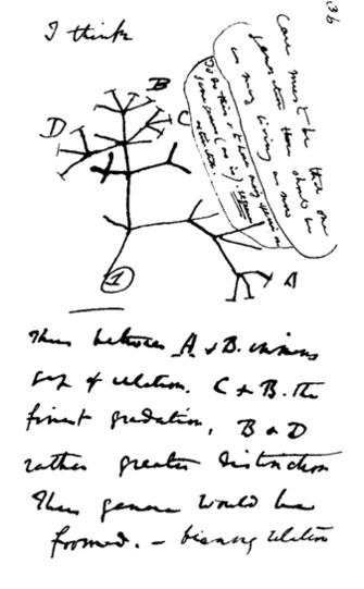 Darwin'in ünlü çalışması; türler arasındaki evrimin tamamen yeni türlere yol açtığını gösteriyor.