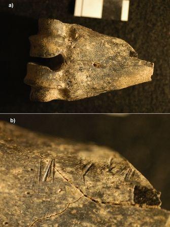 Görsel 1. (a) Kenya'daki Koobi Fora'da bulunan ve üzerinde kesik izleri olan 1,5 milyon yıl öncesine ait antilop alt bacak kemiği (uzun eklemli) fosili; (b) kesik izlerinin yakından görünüşü.  2013 Nature Education, Briana Pobiner.