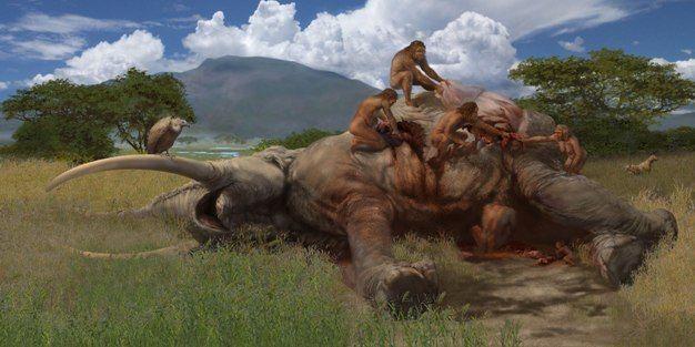 Görsel 3. Kenya'daki Olorgesailie'da yaklaşık 1 milyon yıl önce Homo erectus tarafından bir fili kesip doğrama işleminin canlandırımı.  2013 Nature Education, Karen Carr/Smithsonian Enstitüsü.