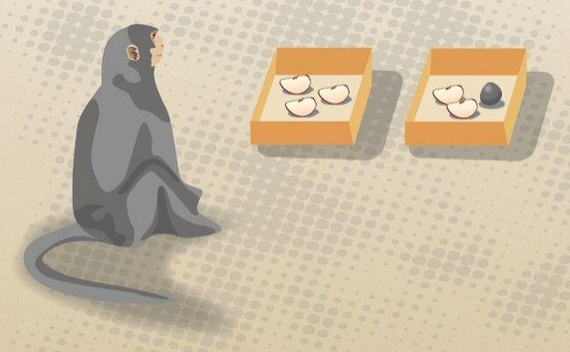 Görsel 5: Sayı ayırımı. Hauser ve arkadaşları (2000) rhesus maymunlarının önüne elma dilimleri yerleştirdi. Maymunlar bir kutudaki dilimlerin toplam sayısı 4'ten az olduğu zaman, daha fazla dilim olan kutuları tercih ettiler.