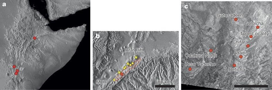 a) Geç Miyosen ve Afrika'daki canlıların yaşam alanlarını gösteriyor. 1. Chorora; 2. Lothagam; 3. Samburu Tepeleri; 4. Nakali (Görsel: Ulusal Jeofizik Bilgi Merkezi). b) Ana Etiyopya Çukuru (MER) ile Afar Çukuru arasındaki mesafeyi gösteriyor. Kırmızı çizgilerle giden bölge bu yazıda adı geçen Chorora Oluşumları'nı gösteriyor. Sarı ile işaretlenmiş yıldız ve daireler 5-7 milyon yıl öncesine ait volkanik merkezleri gösteriyorken (Kuzeydoğudan güneybatıya doğru: Afdem, Asabot ve Gumbi), kırmızı kare ise c'de detayları gösterilen belgeyi işaret ediyor. (Görsel: Ulusal Jeofizik Bilgi Merkezi). c) Chorora Oluşumları civarı