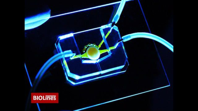 Bir göz çipi; mikroakışkan kanallar (sarı) besinleri merkezdeki yuvarlak platformda bulunan hücrelere getirir. Ekip, ek olarak göz kapağını kırpmayı simüle eden mikro göz kapağını bu çipe eklemiştir. - Dan Huh Laboratuvari, Pennsylvania Üniversitesi