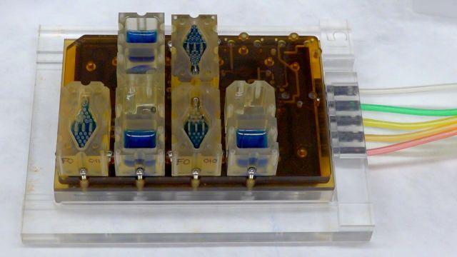 Cebe sığabilecek boyuttaki dişi üreme sistemi modeli, EVATAR.  Kanımsı sıvı (mavi), içinde mini organların bulunduğu haznelerden akarak geçer.– Northwestern Üniversitesi