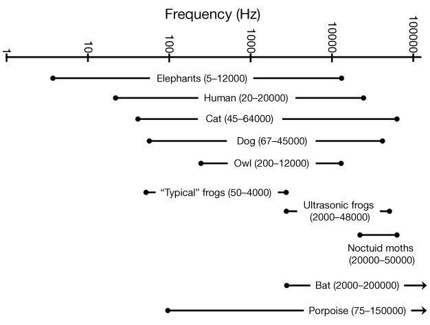 Görsel 4: Çeşitli hayvanlar tarafından algılanan ses frekans aralıkları. Aralıklar, Strain (2003)'e ait olup farklı yöntembilimlerle ölçülmelerinden ötürü yaklaşık olarak hesaplanmıştır. Ölçek logaritmik olduğu için, yüksek frekanslar eksende daha az yer kaplamaktadır.
