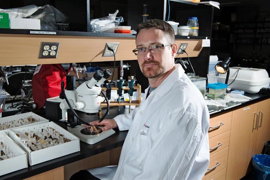 T. Ryan Gregory, Guelph Üniversitesi'ndeki laboratuarında.