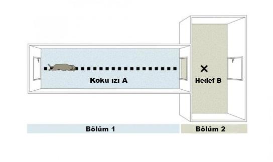 Yukarıda test odalarının bir şeması verilmiştir.